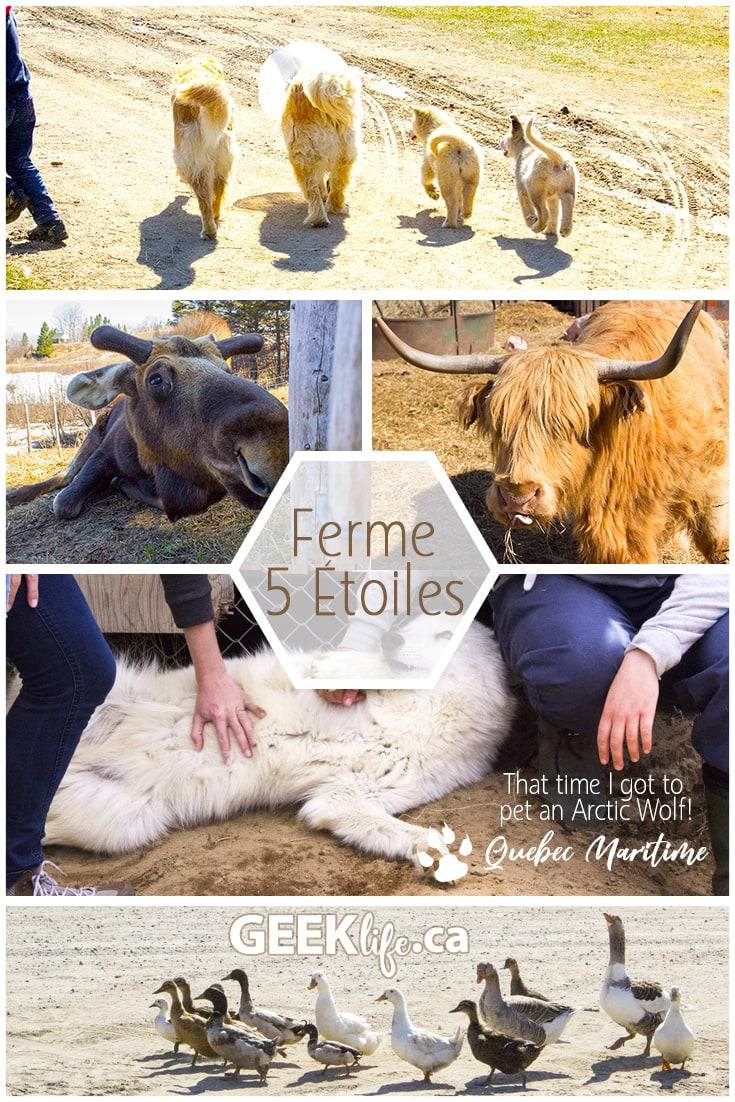 Ferme 5 Etoiles Quebec Maritime Artic Wolf Farm