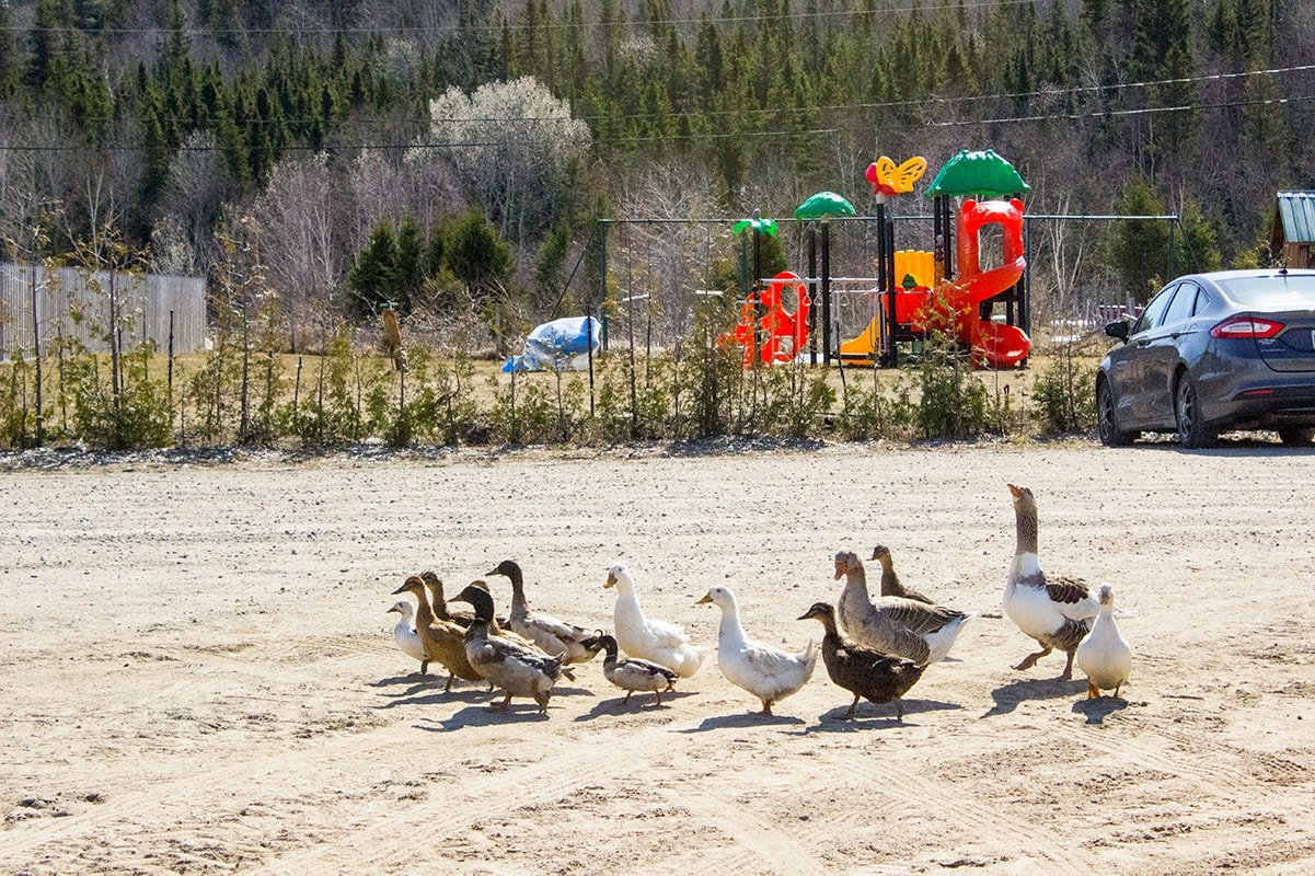 Goose and Gander Ferme 5 Etoiles Maritime Quebec