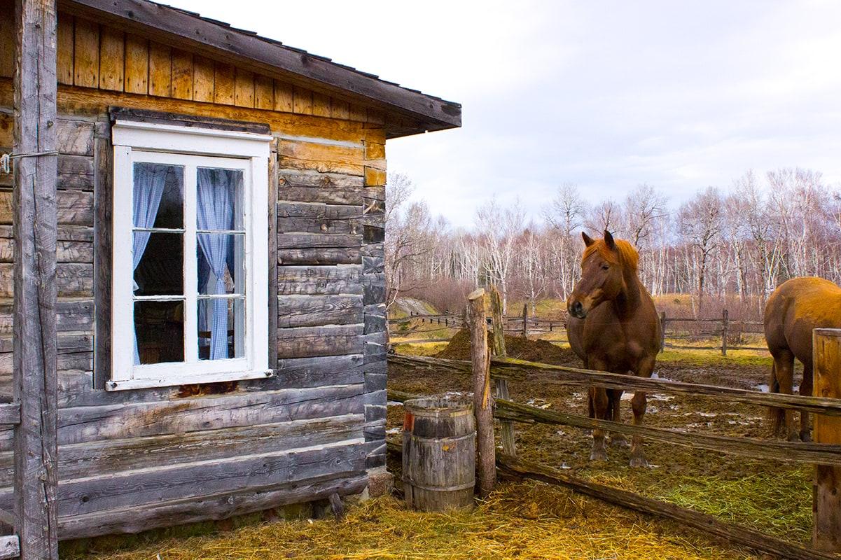 Cabin Horse Zoo Sauvage de St-Felicien Quebec Maritime