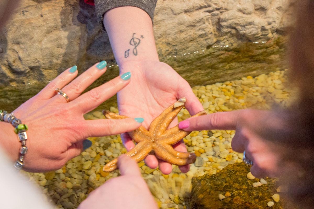 Road Trip Fjord Musee Starfish