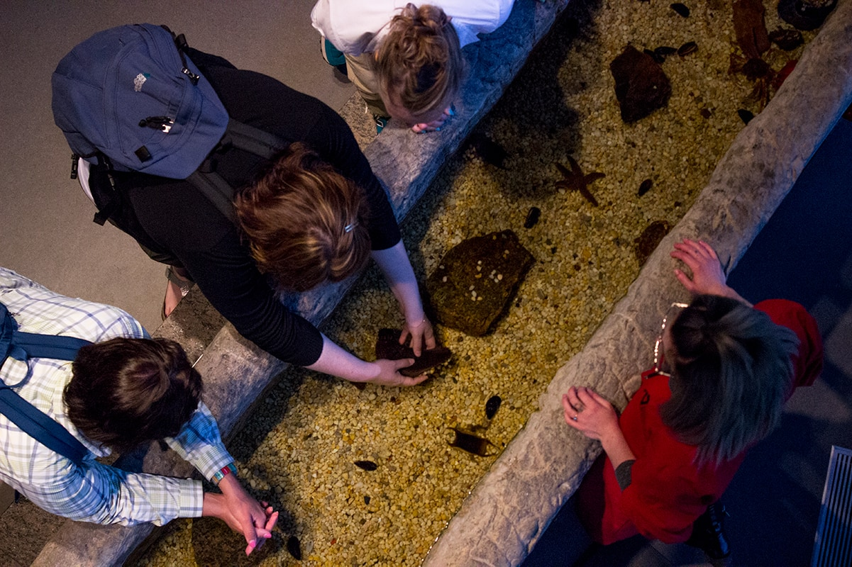 Sea Cucumber Fjord Musee Quebec Maritime Road Trip